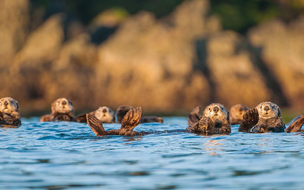 Otter2-Credit-JamesThompson-1280-800.jpg