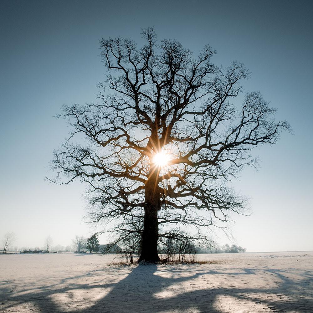 Naturfoto_Winter
