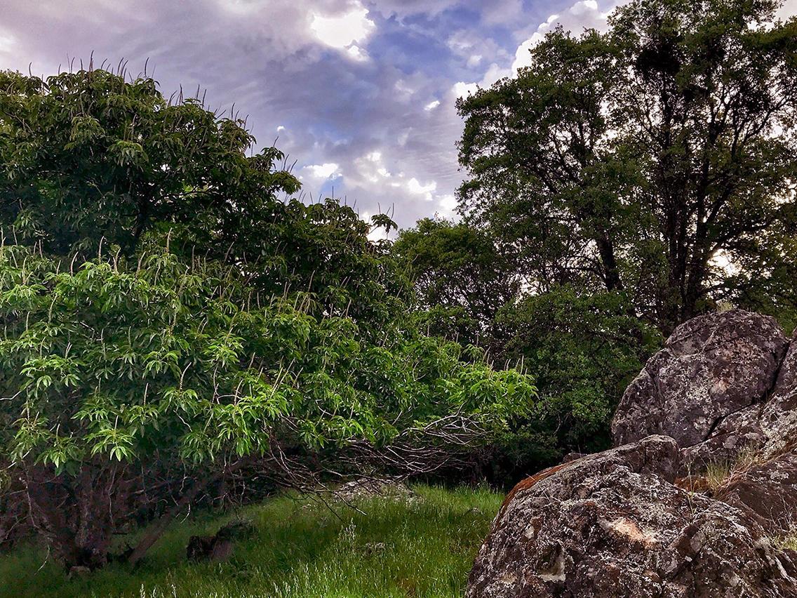 rock_trees.jpg