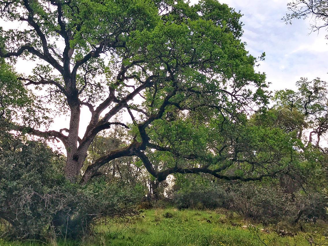 broad_tree.jpg