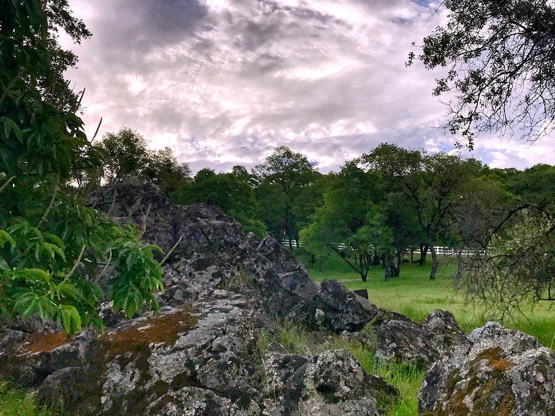 rock_meadow.jpg