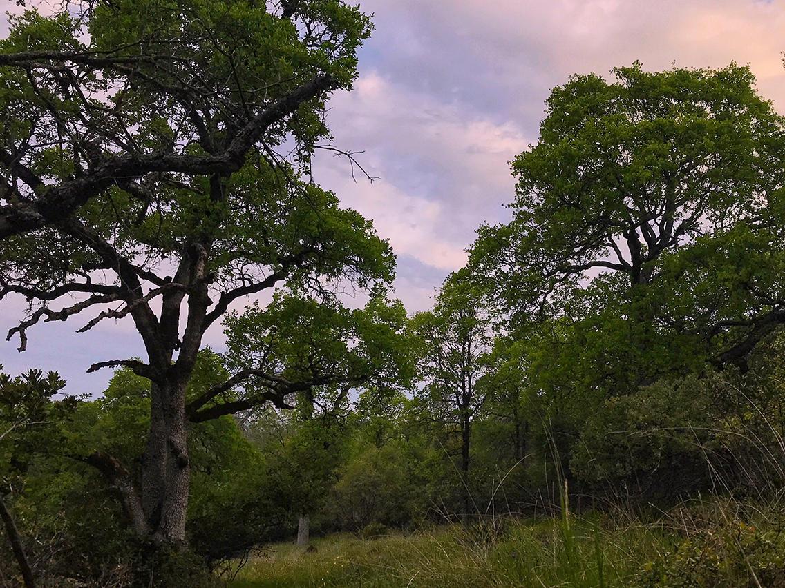 hillside_trees.jpg