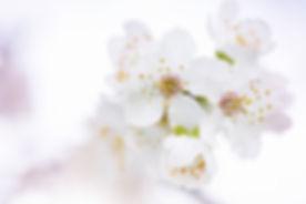 beautiful-flowers-bloom-blooming-blossom