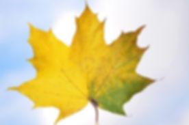 tree-nature-branch-plant-sky-leaf-101285