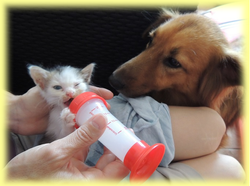 Association DIRHA : chat - chien