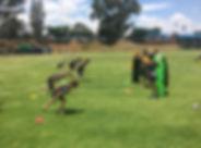 Skills 4.jpg