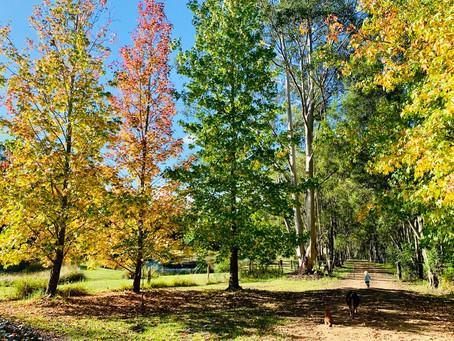 Hellloooo Autumn, we've missed you!!!