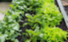 veg patch_edited.jpg