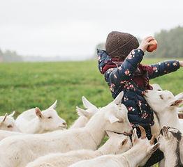 L'App du Terroir Chèvres