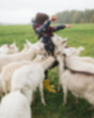 Las cabras Kid Alimentación