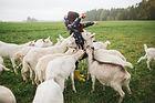 Capre di alimentazione del capretto
