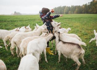 Cría de cabras en la tierra de Israel