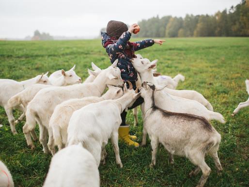 """「北歐風格」學習北歐瑞典人""""Lagom"""" 快樂秘訣的生活態度"""