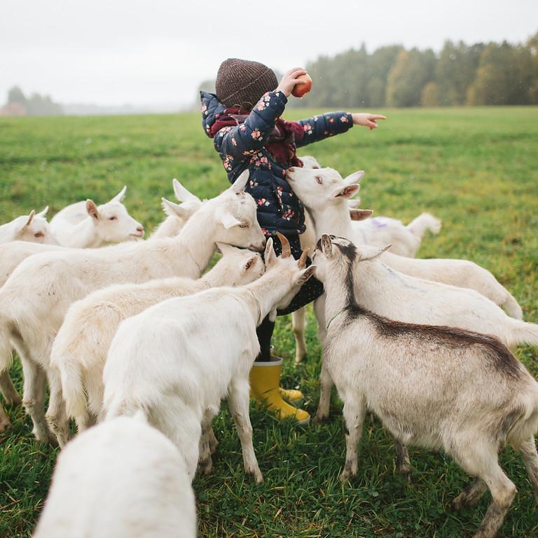 Dairy Goat Raising Workshop