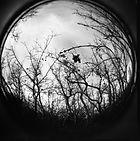 Foret Noire Circular Birds