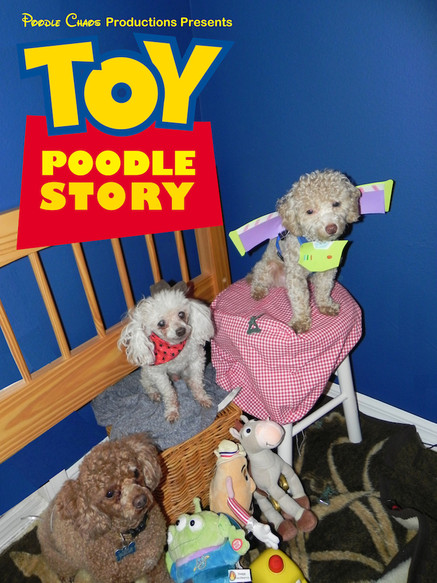 Toy Poodle Story