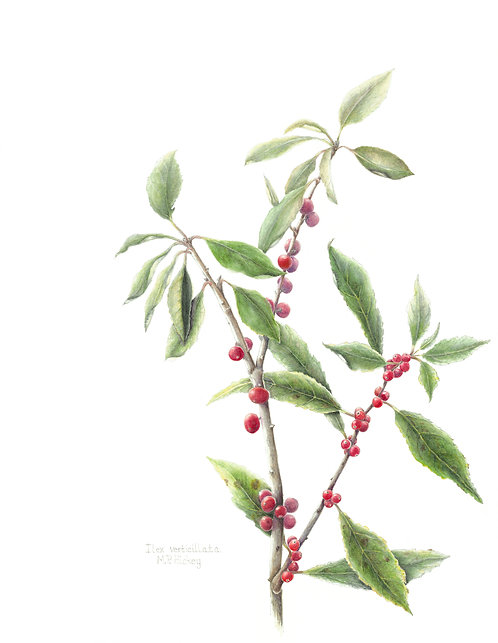 Winterberry, Mary Page Hickey