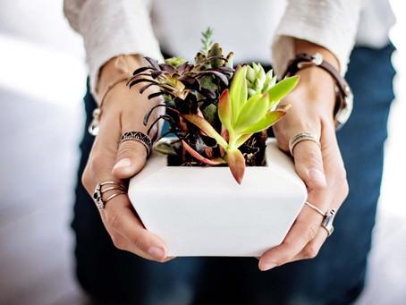 Bitki Yetiştirmenin 5 Faydası