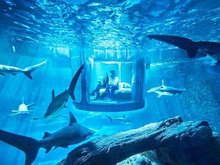 Su altında köpek balıklarıyla uyuyacağınız bir oda