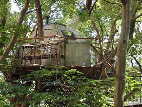 Kuşlardan esinlenerek yapılan ağaç ev