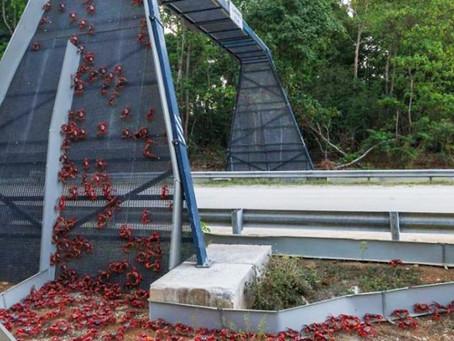 Her yıl binlerce hayvanı kurtaran köprülere sahip şehirler