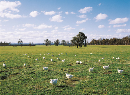Why we choose Mt Barker Free Range Chicken