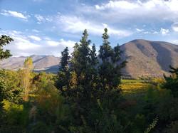 Valle del Limarí, región de Coquimboage 2020-12-15 at 12.38