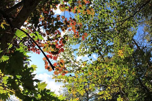 【イメージ】癒しの森-20121015.JPG