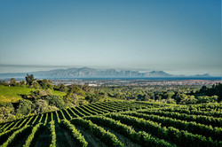 Elgin Vineyard Views