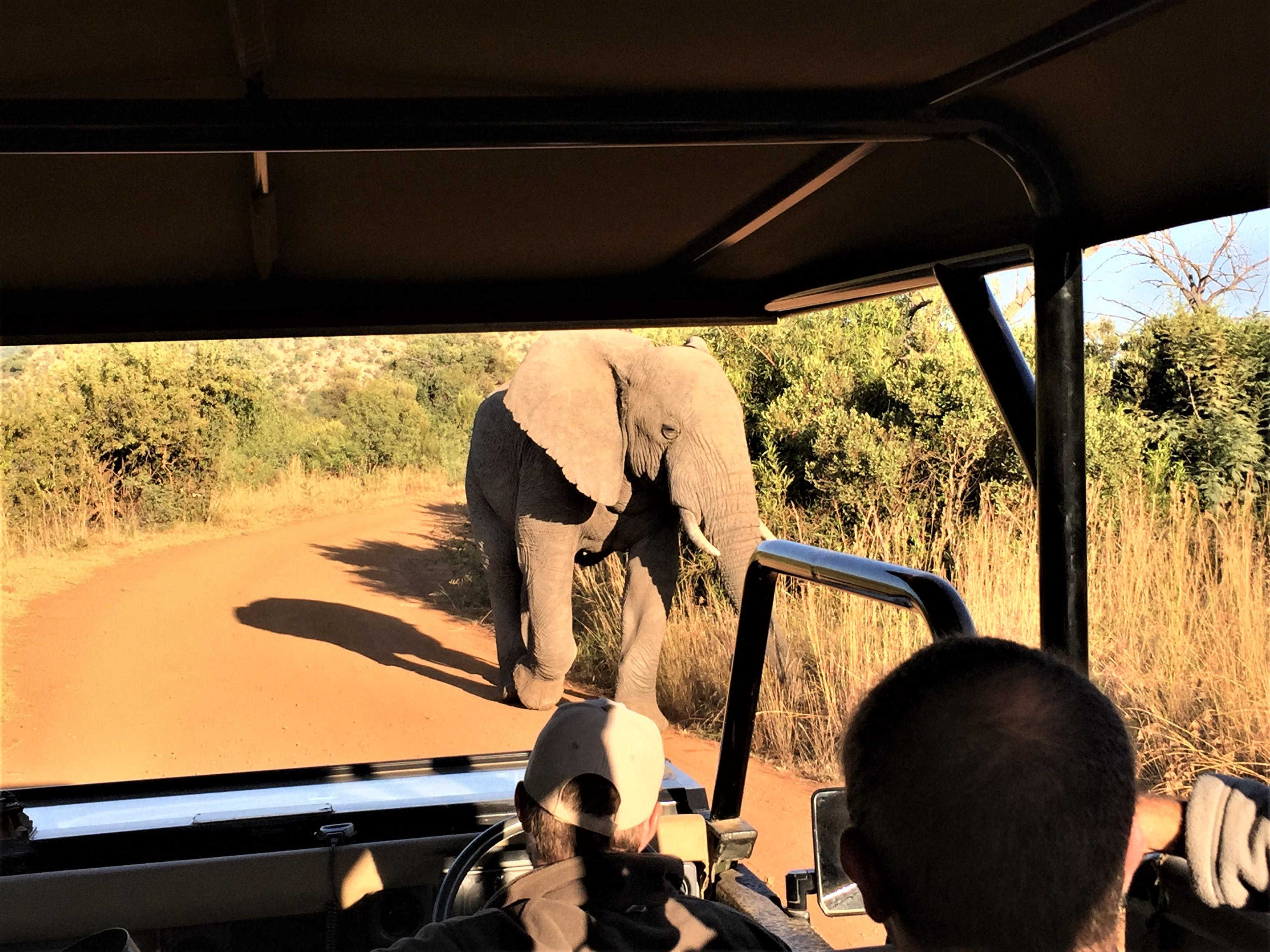 Elephants on your safari - Madikwe