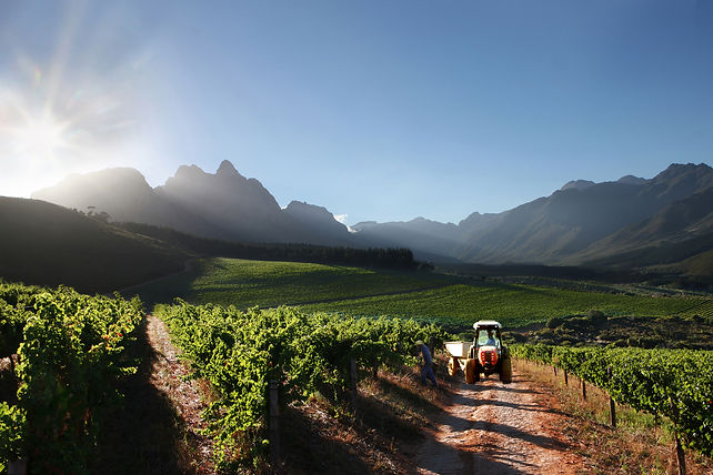 The stunning vineyards of Stark Conde in Stellenbosch's Cape Winelands South Africa - Luxury Wine Trails exclusive wine & food tours