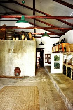 Stellenbosch Simonsig vineyard