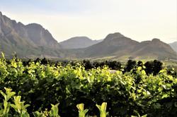 Le Lude Vineyard views - Franschhoek