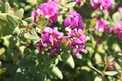 Wineland Wildflowers in full-bllom