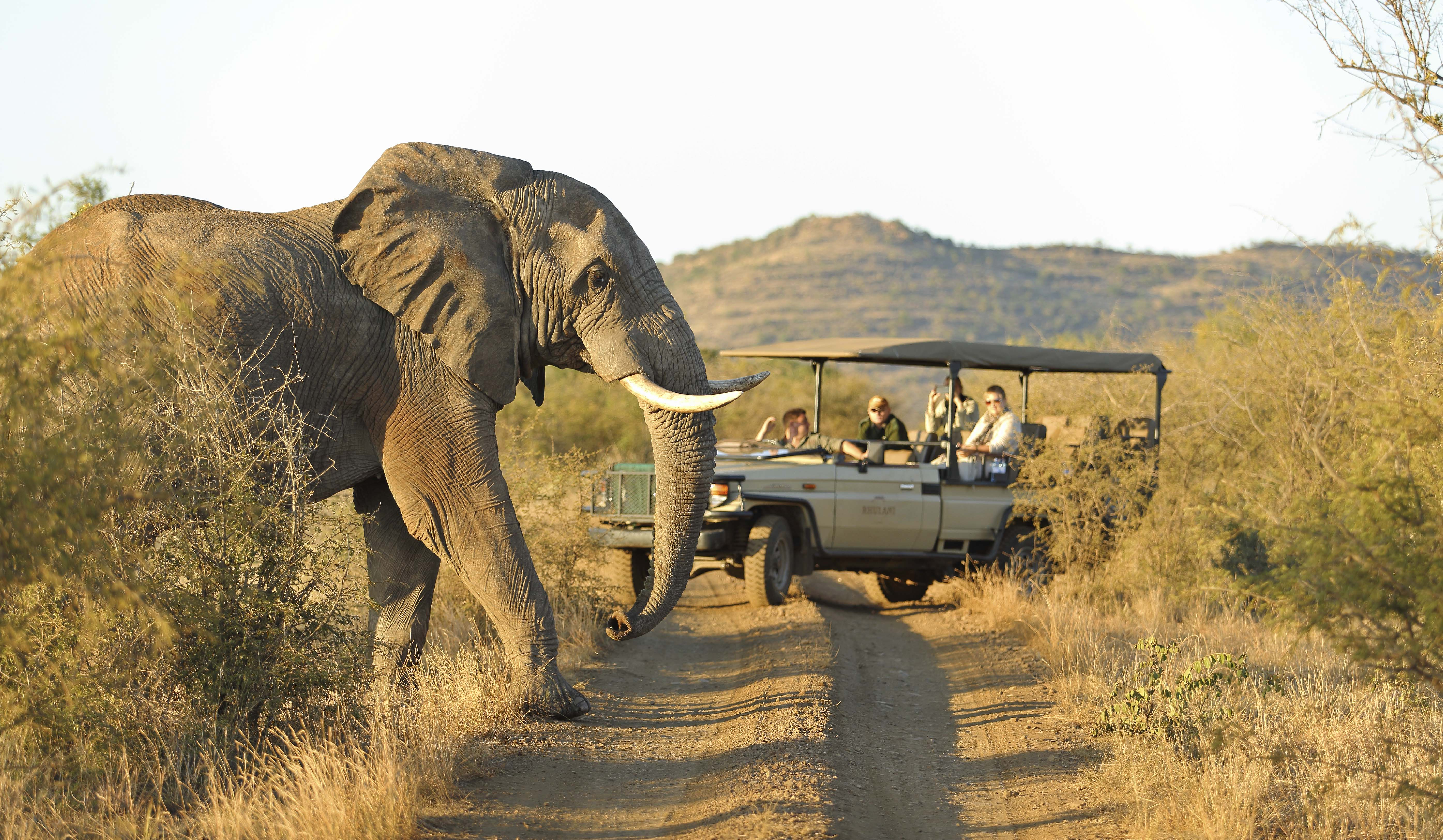Elephants - Safari - South Africa