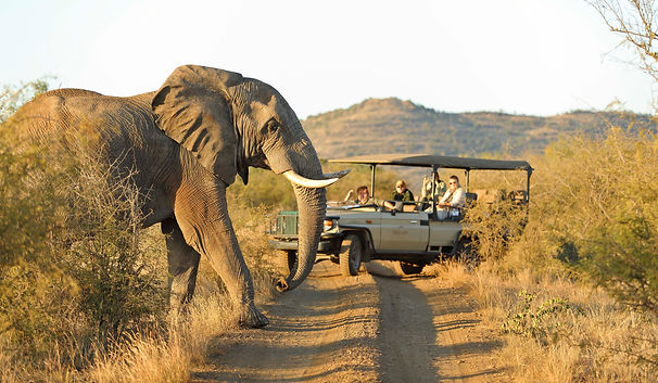 On safari in Madikwe South Africa with Luxury Wine Trails tours