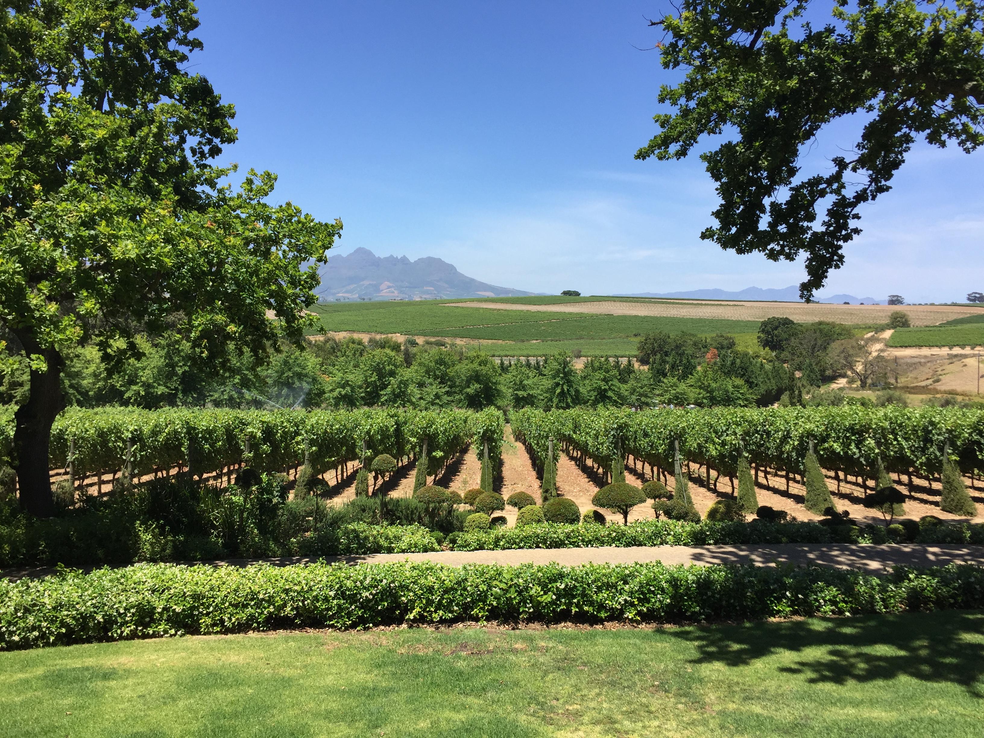 DeMorgenzon vineyard views