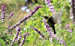 Local Fauna - Cape Winelands