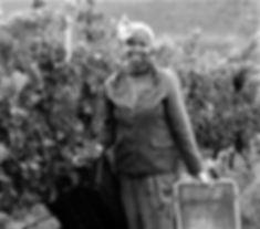 Iona Wine Farm Elgin Cape Winelands South Africa