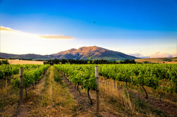 Stunning vineyard views