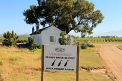 Vergenoegd Vineyards - Stellenbosch