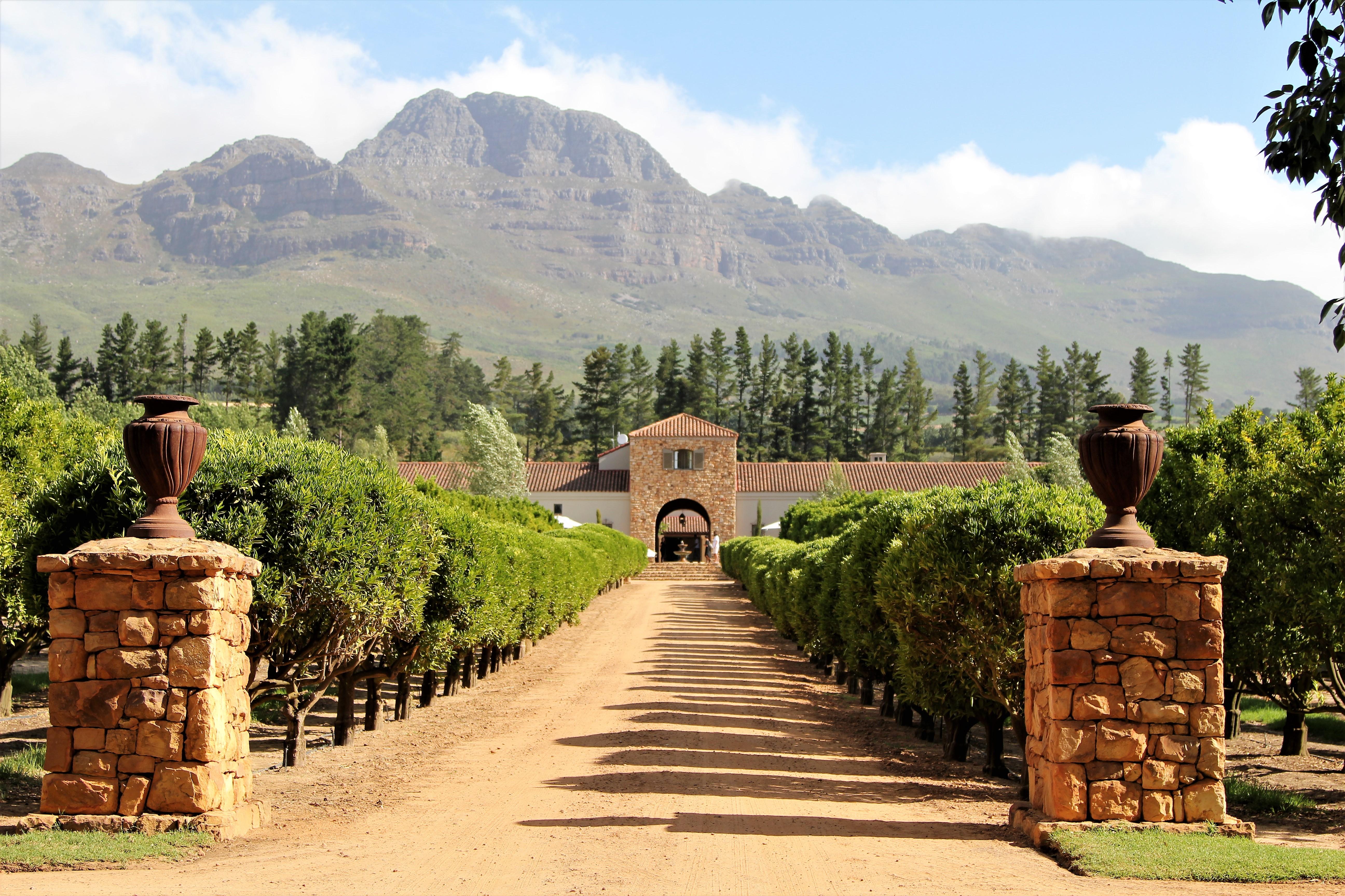 Waterford Vineyard Stellenbosch