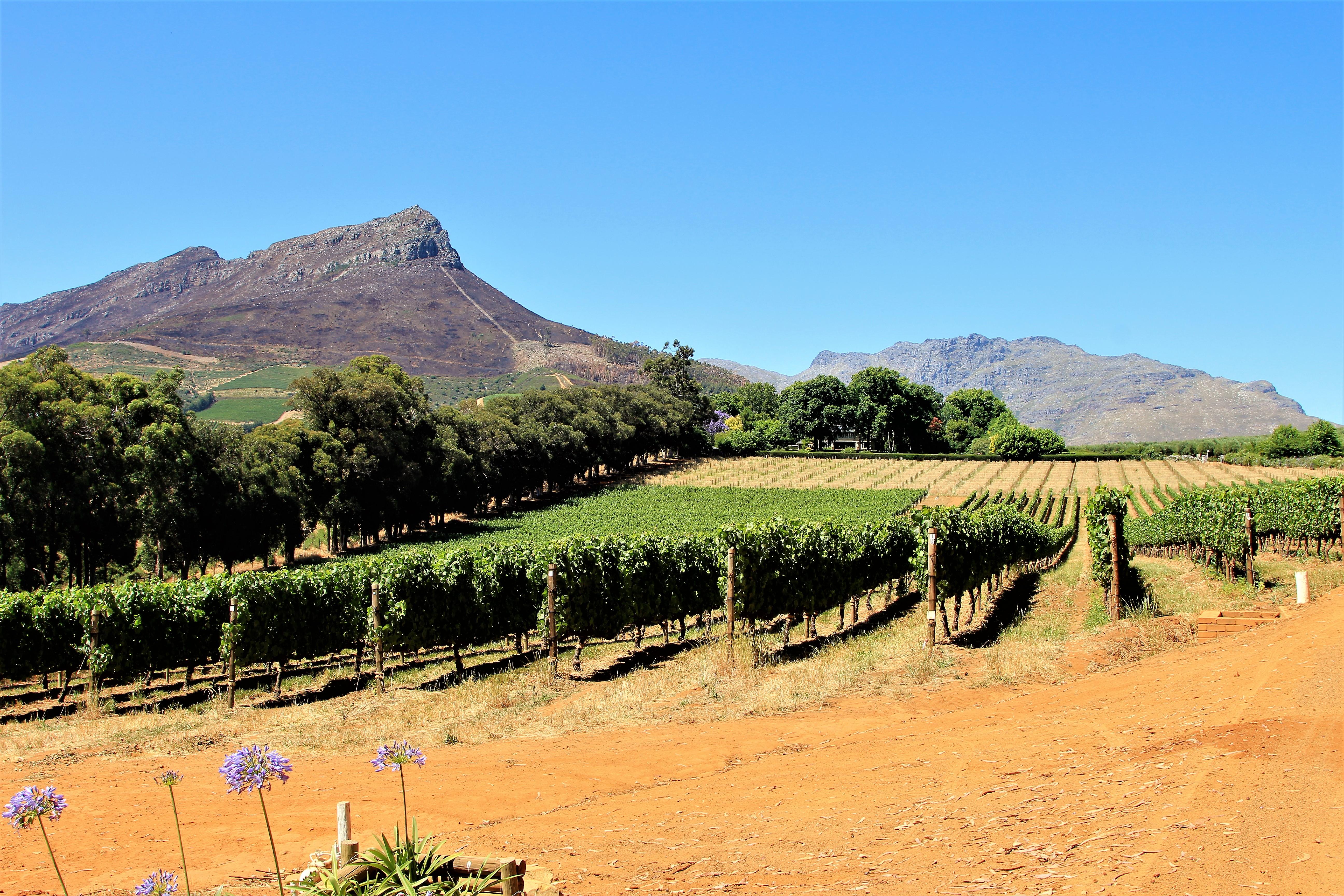 Thelema Vineyards