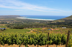 Cape Point Vineyards - ocean views