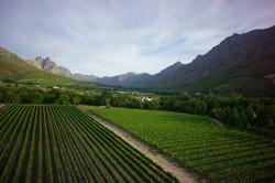 Stellenbosch by Luxury Wine Trails