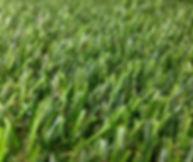 pavimento erba sintetica