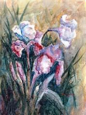 Iris Inspiration