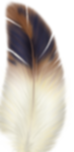 feather_PNG12983.png