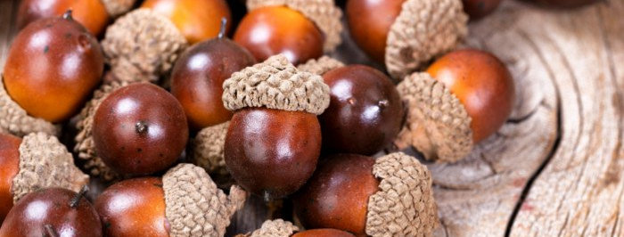 Acorns  (3's ) Two Days a week