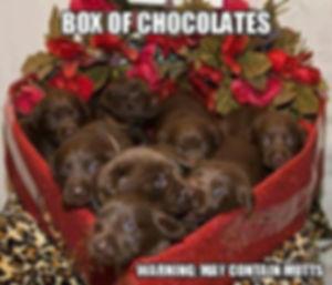 box-of-chocolates-warning-may-contain-mu